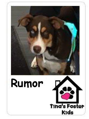 Foster kid Rumor!